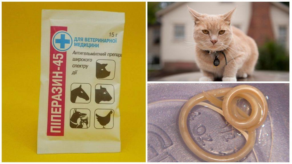 Пиперазин для кошек и собак