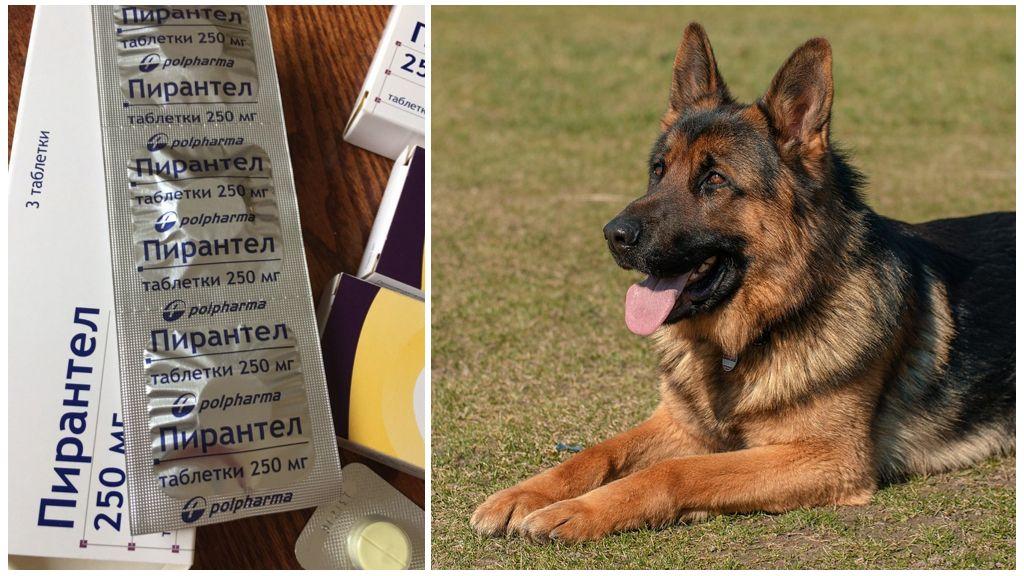 Пирантел для собак и щенков