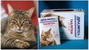 Таблетки Празител для кошек и котят