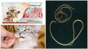 Тронцил К для кошек