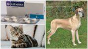 Вермокс для собак и кошек