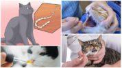 Лечение ленточных глистов у кошек