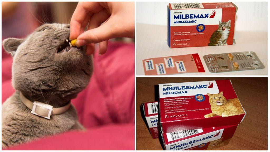 Мильбемемакс при описторхозе у кошек