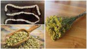 Рецепты от огуречного цепня